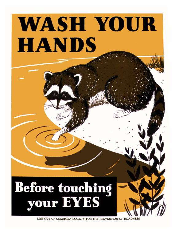 illustrational poster of a raccoon dipping its paw in water