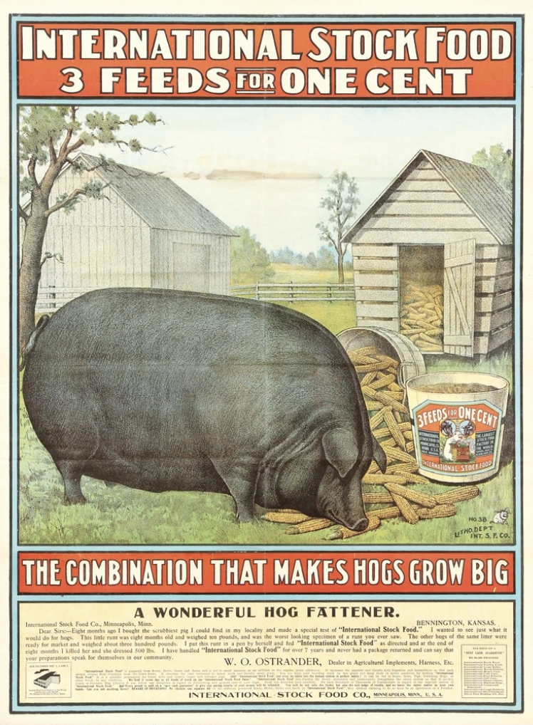 etched image of a giant black pig eating corn in front of a barn